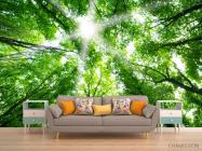 Фотообои свет свозь кроны деревьев - 1
