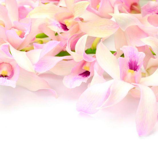 Фотообои Нежно-розовые орхидеи 1377