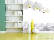 Фотообои Орхидеи белые - 3