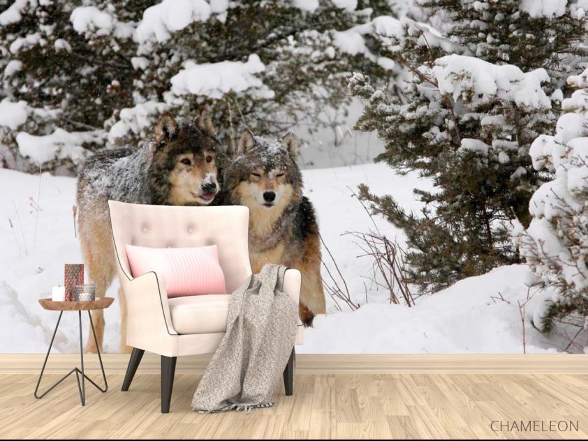Фотообои Волки в снегу - 4
