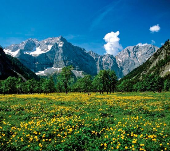 Фотообои Цветочный луг горы 0407