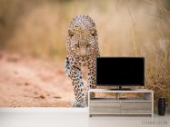 Фотообои гепард - 2