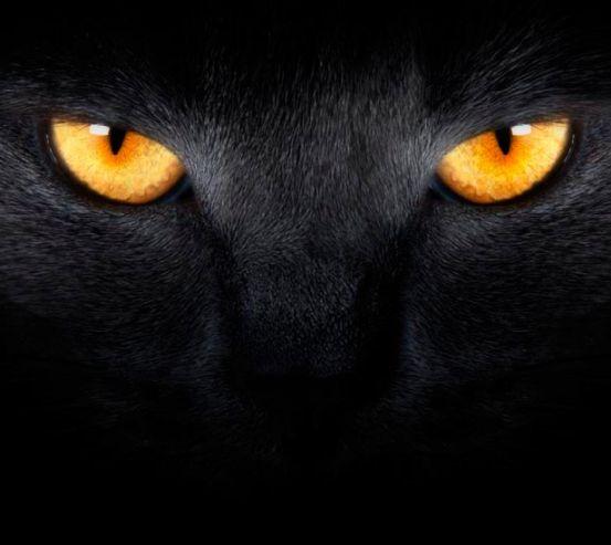 Фотообои Черная кошка 1247