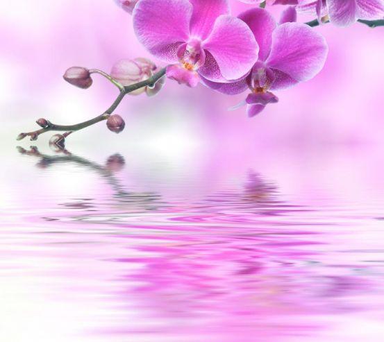 Фотообои розовая орхидея над водой 20442