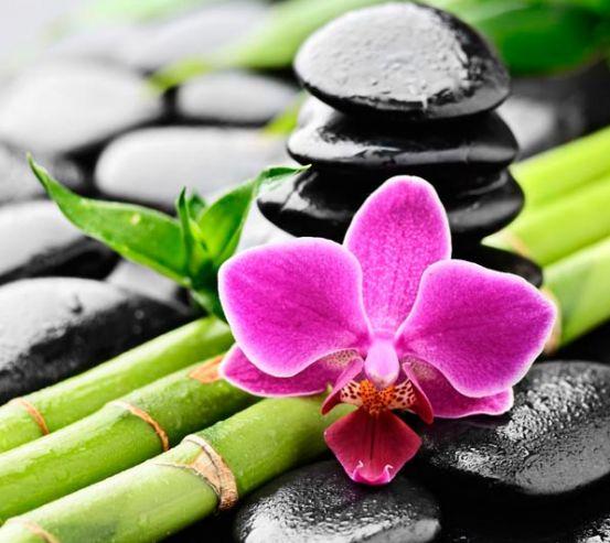 Фотообои Бамбук, камни, орхидея 5601