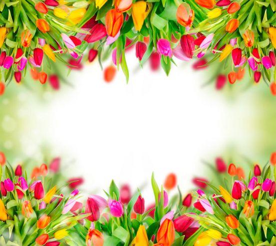 Фотообои Рамка из тюльпанов 7571