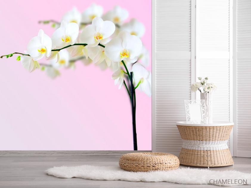 Фотообои Веточка орхидей белоснежных - 2