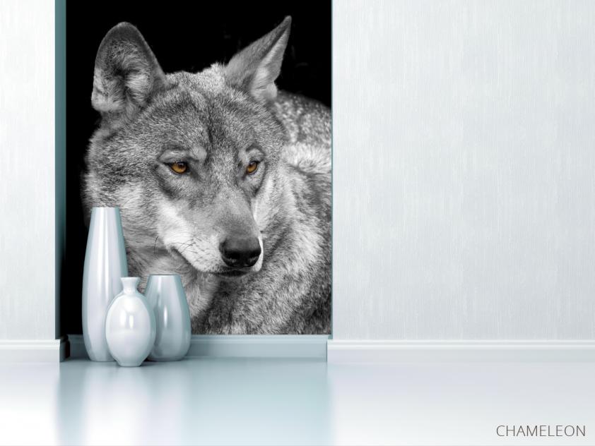 Фотообои белый волк - 1