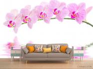 Фотообои Отражение орхидей - 1