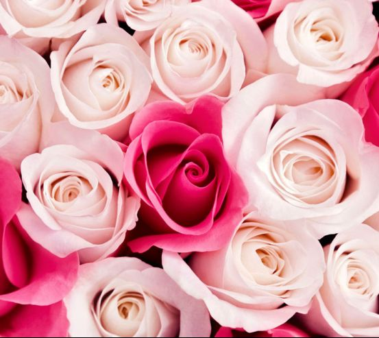 Фотообои Розовые бутоны роз 20011