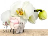 Фотообои Орхидеи желто-белые - 4