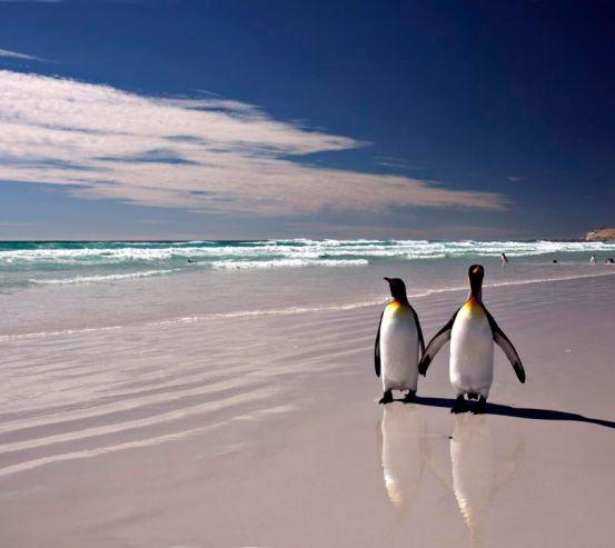 Фотообои Пингвины на берегу 3238