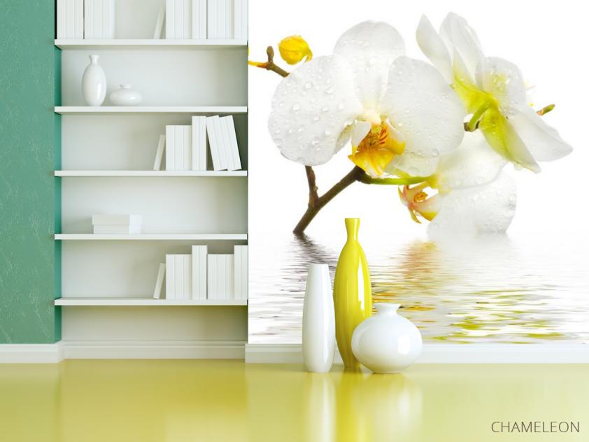 Фотообои Белоснежная орхидея в воде - 3