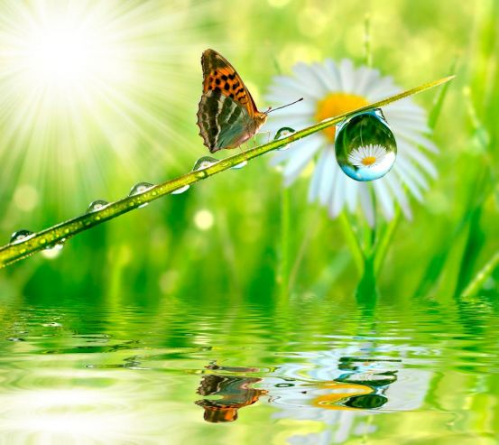Фотообои Бабочка над водой 0879