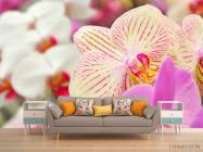 Фотообои Орхидеи в крапинку  - 1