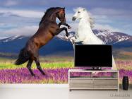 Фотообои белая и черная лошадь - 2