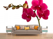 Фотообои Ветка бардовых орхидей - 1