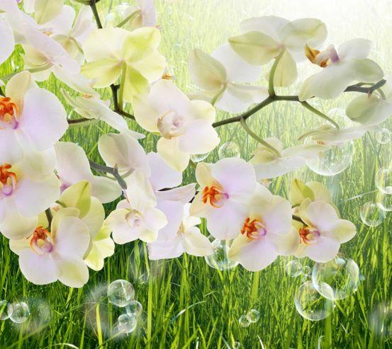 Фотообои белая орхидея на фоне травы 20704
