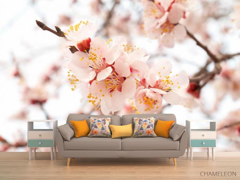 Фотообои Цветущий абрикос весной - 1