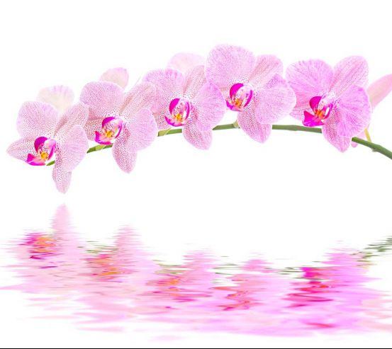 Фотообои Отражение орхидей 8469
