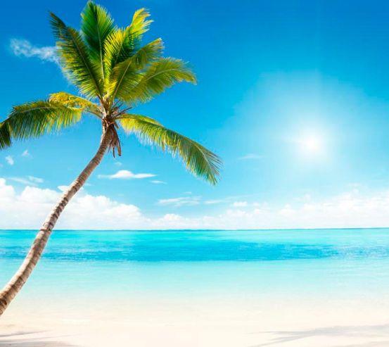 Фотообои Пальма, солнце, пляж 2560
