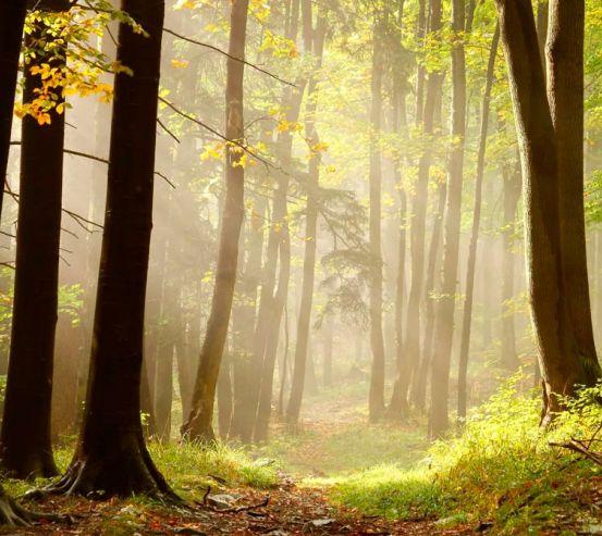 Фотообои Деревья, лес 0818