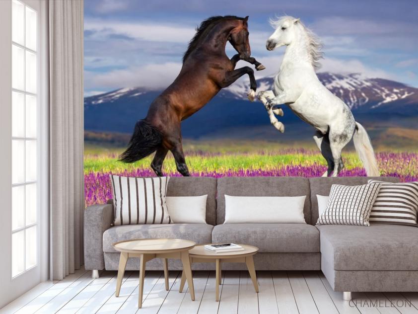Фотообои белая и черная лошадь - 3