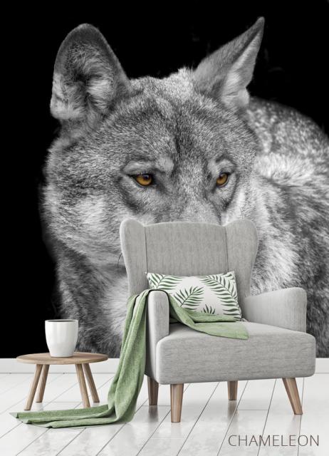 Фотообои белый волк - 3