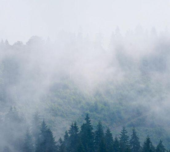 Фотообои туман в лесу 20361