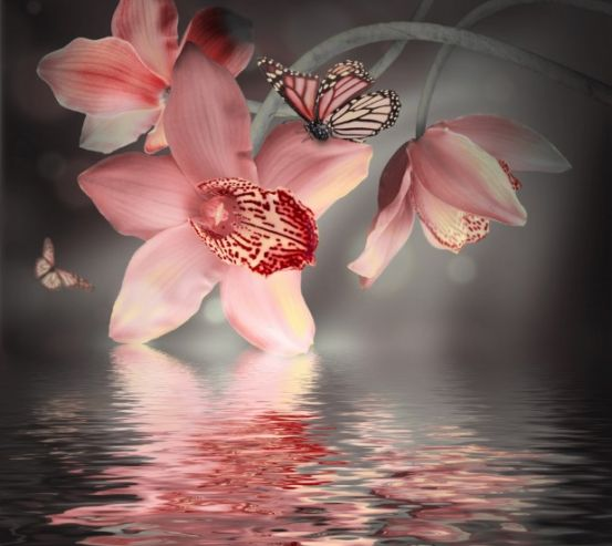 Фотообои Цветок с бабочкой 12901