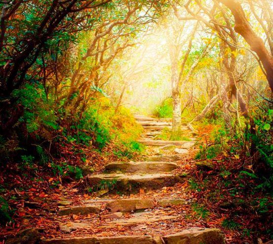 Фотообои Ступеньки, лес 8834