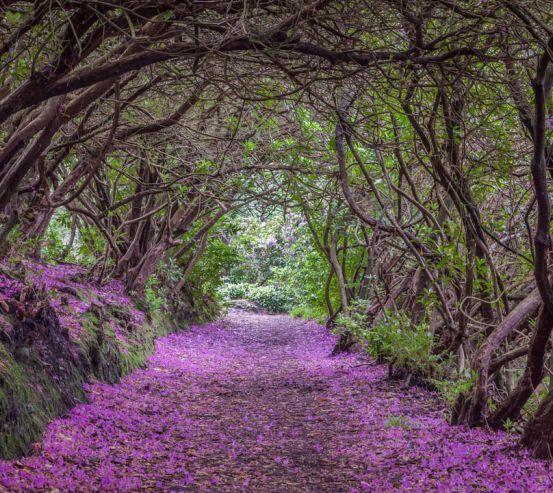 Фотошпалери Арка з квітів 23573