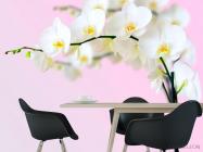 Фотообои Веточка орхидей белоснежных - 1