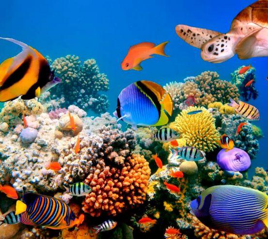 Фотообои Множество рыб 9639