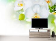 Фотообои Орхидеи в цвету - 2