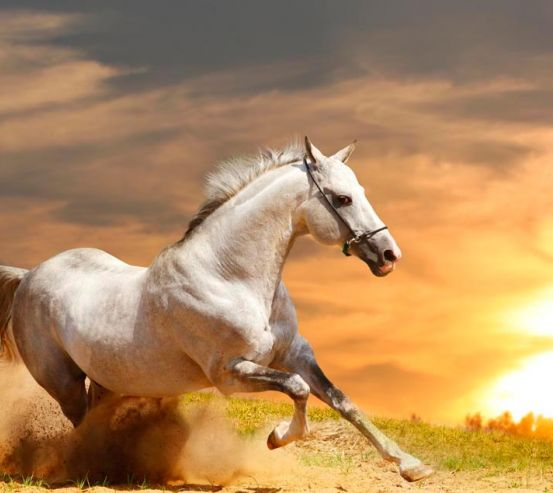 Фотообои Бегущий конь 7380