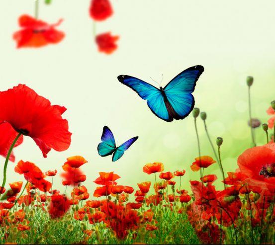 Фотообои Красные маки с бабочками 19998
