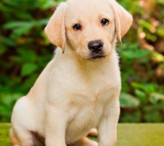 Фотообои Милый щенок 11278