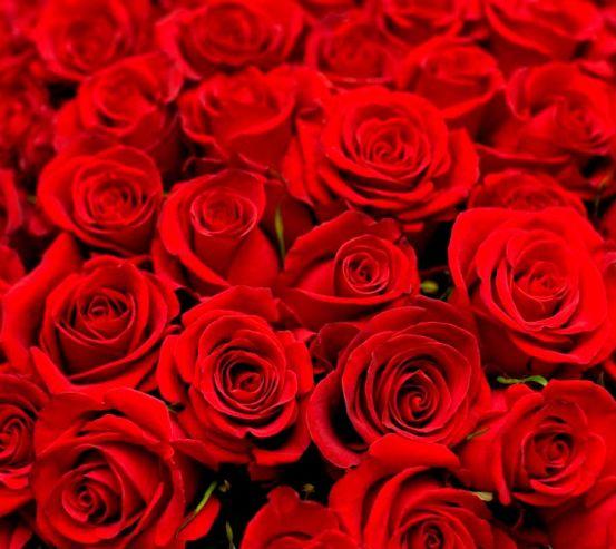 Фотообои Букет алых роз 8721