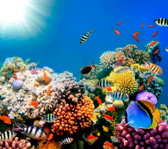 Фотообои Рыби в море 9638