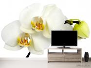 Фотообои Орхидеи желто-белые - 2
